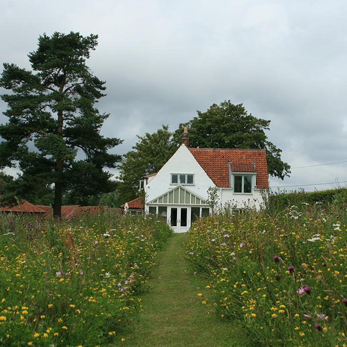 A Modern Wildflower Garden   Landscape Design Project By Susannah  McDougall, Norfolk