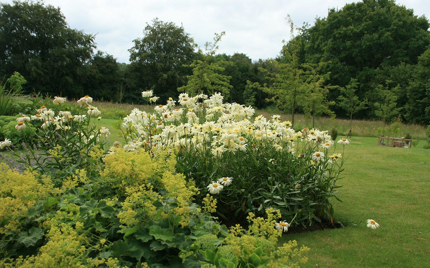 ... A Modern Wildflower Garden   Landscape Design Project By Susannah  McDougall, Norfolk ...