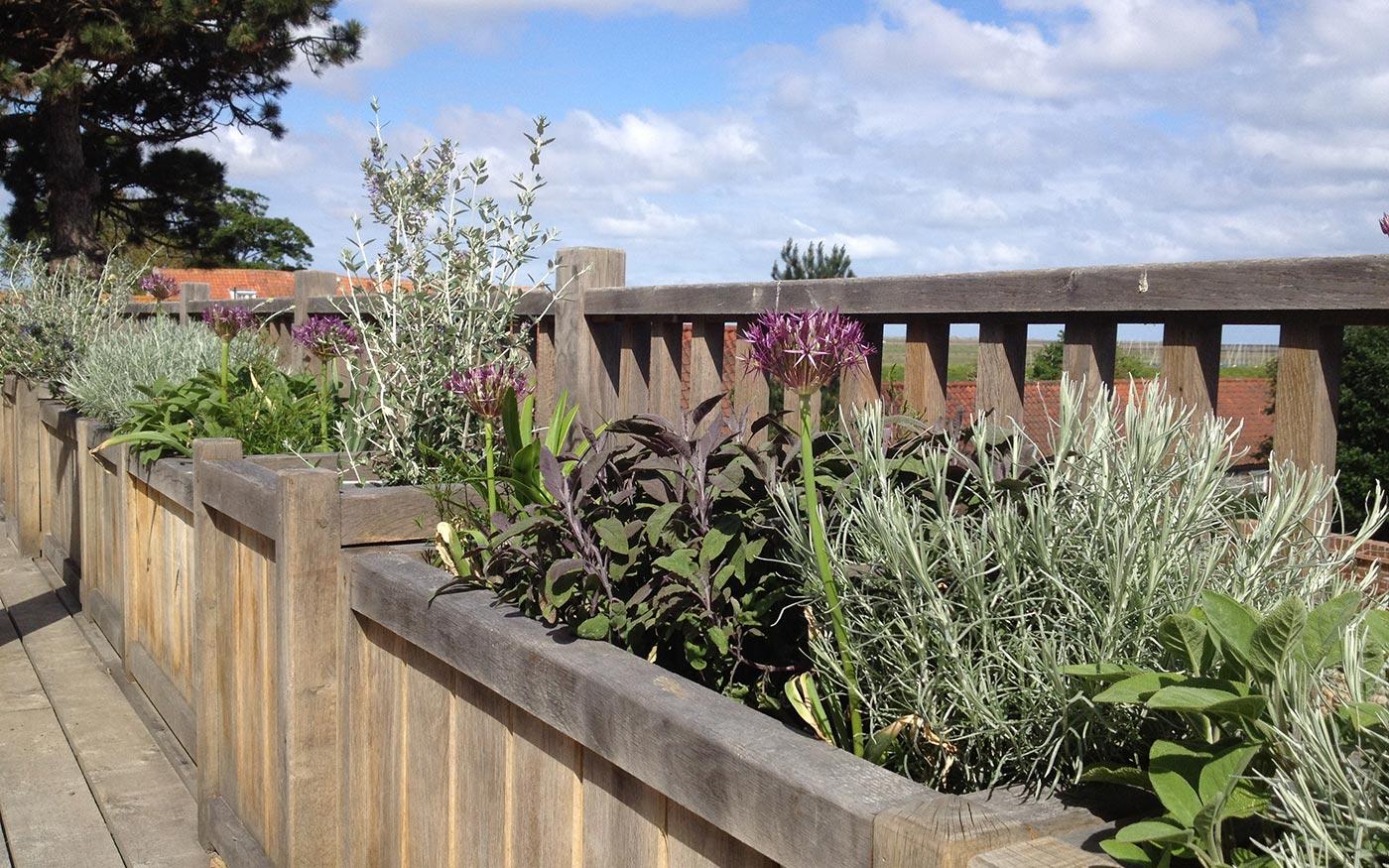 ... A Contemporary Coastal Garden   Landscape Design Project By Susannah  McDougall ...